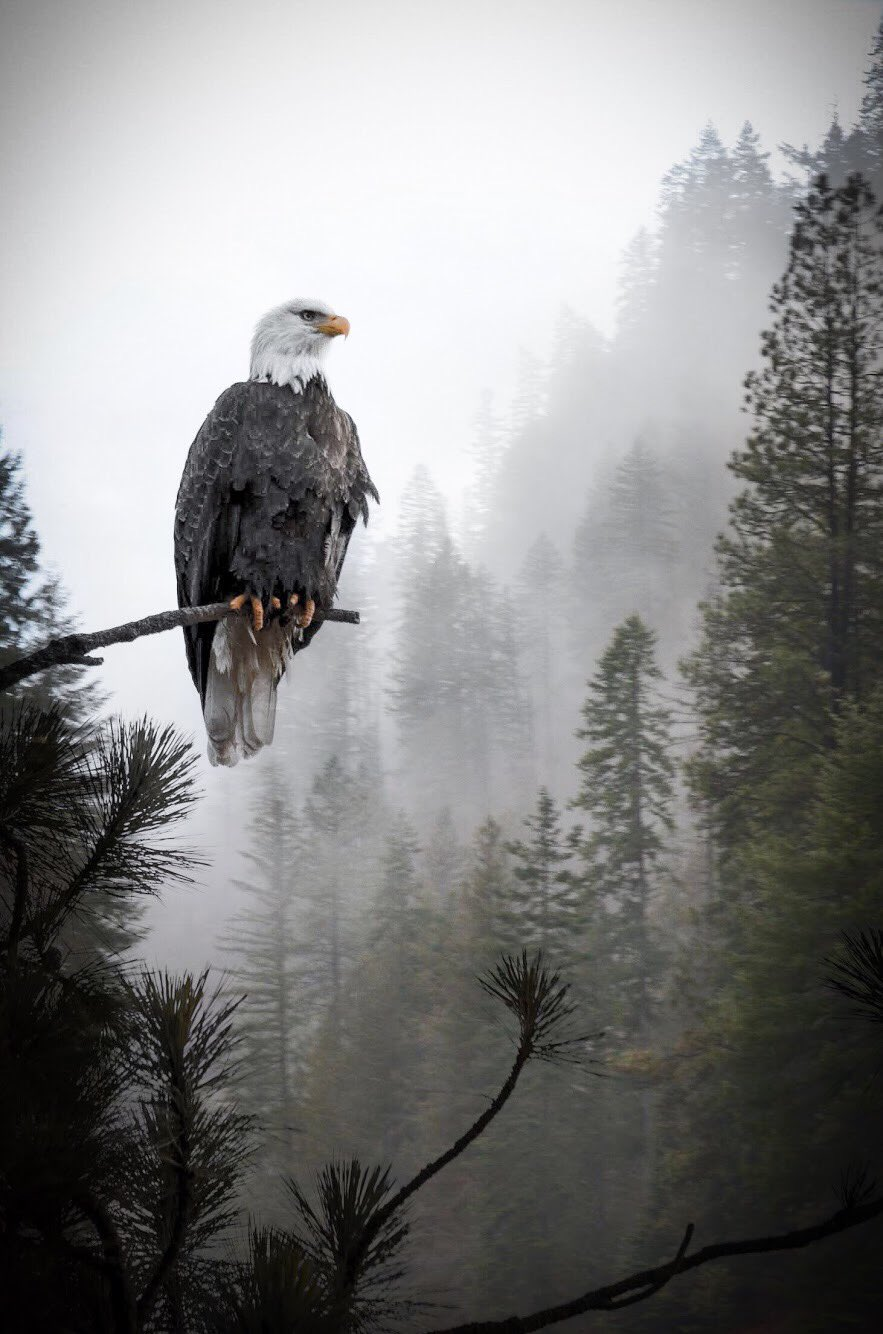 It doesn't get more majestic than this: An eagle at Coeur d'Alene by Derek Butler #Idaho 🦅 https://t.co/DB7hD0ntUZ