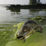 EPA plan seeks cuts in pollution that causes Lake Erie algae