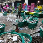 Thai fishing industry sees progress but abuses remain: UN