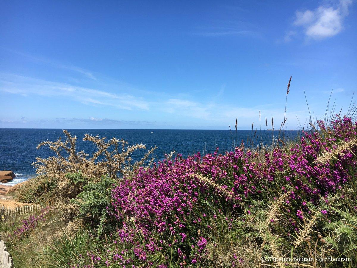 #Bretagne un petit coin de mer et la lande de Ploumanach pour bien commencer la journée ! #magnifiqueFrance https://t.co/tmMAlRndYS