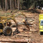 Ban? What ban? Logging persists in Mau as few KFS enforcers deployed