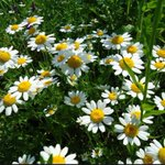 Pyrethrum farmers want irregular lease agreements annulled