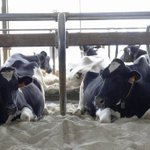 Oregon mega-dairy sued by state for release of wastewater, by contractors for unpaid bills