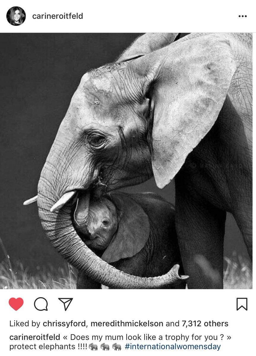 """Does my mum look like a trophy to you?"" Love this post. Can #InternationalWomensDay be about animals too! https://t.co/NwmJ0mLKXq"