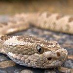 Anti-snake venoms are fake, Poisons Board warns Kenyans