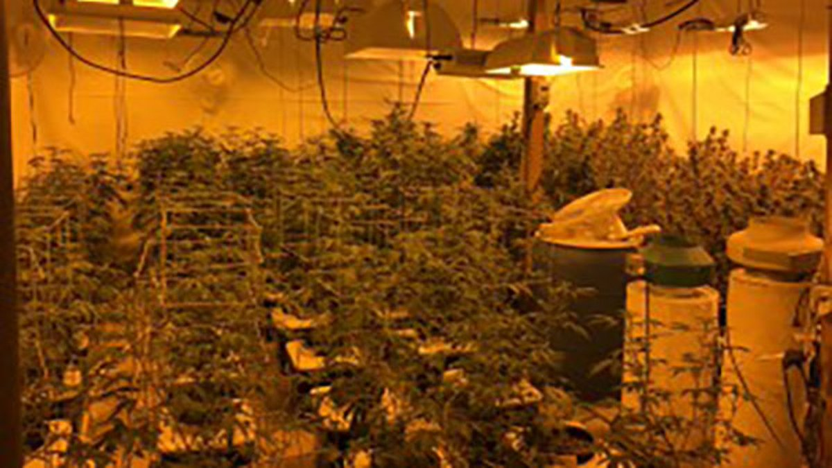 Grayslake man charged after 200 pot plants found growing in Elburn warehouse