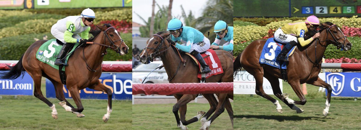 test Twitter Media - Do you hear the people sing French Tigress G3W THEWAYIAM @GulfstreamPark  👑 winner of her last 3 (all stakes) and 4/5 in 🇺🇸 has been nominated to the G2 Appalachian @keenelandracing and is a likely runner if she continues to train well for @GrahamMotion @jose93_ortiz https://t.co/3JQ8DzQnLK