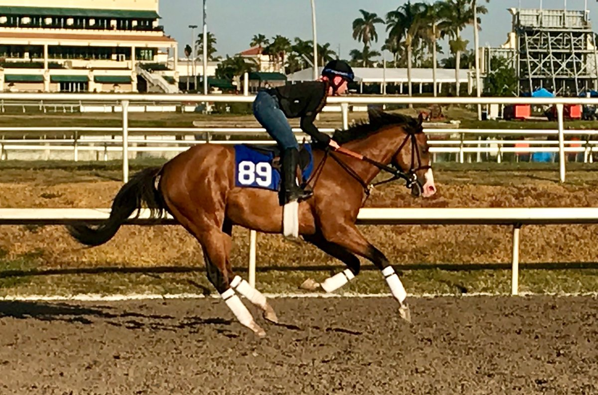test Twitter Media - Hip #️⃣8️⃣9️⃣ Union Rags colt from family of G1W Peace Rules, G2W Corfu and 3YO talent New York Central. We brought him to @FasigTiptonCo Miami to show off his dirt affinity, skips across it 🏇💨 breeze show is Mon March 26th https://t.co/H2UeCXIKmM
