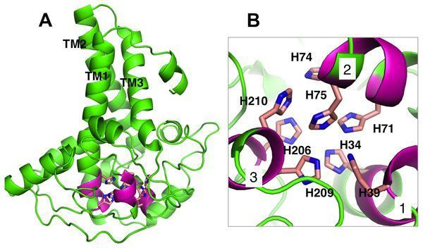 test Twitter Media - Homology modeling and docking studies of a Δ9-fatty acid desaturase from a Cold-tolerant Pseudomonas sp. AMS8 https://t.co/FVKlHFkjkI https://t.co/iElJxCbj4F
