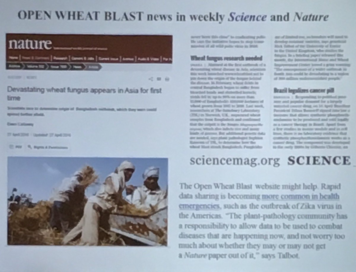 test Twitter Media - Interesting and equally devastating talk by Tofazzal Islam on Wheat Blast in Bangladesh. @plantdisease @MSAFungi https://t.co/grpkUgtnHz