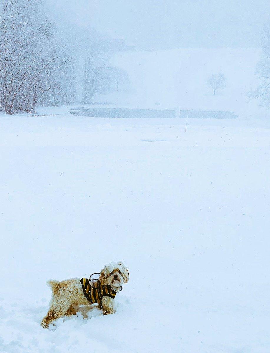 #winterstormtoby