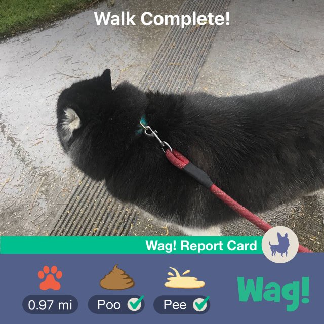 Just got my dog walked by Wag! Thanks so much ! cm6jLaEAqI