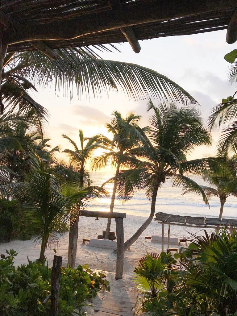 RT @MONDAYSWIMWEAR: Palm Paradise ???? https://t.co/YsgH8ml6v2