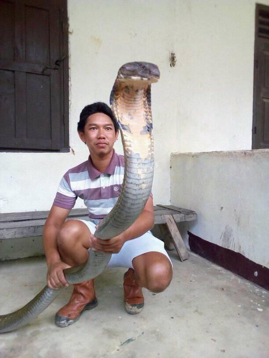 Foto ular raksasa di laut merah 64