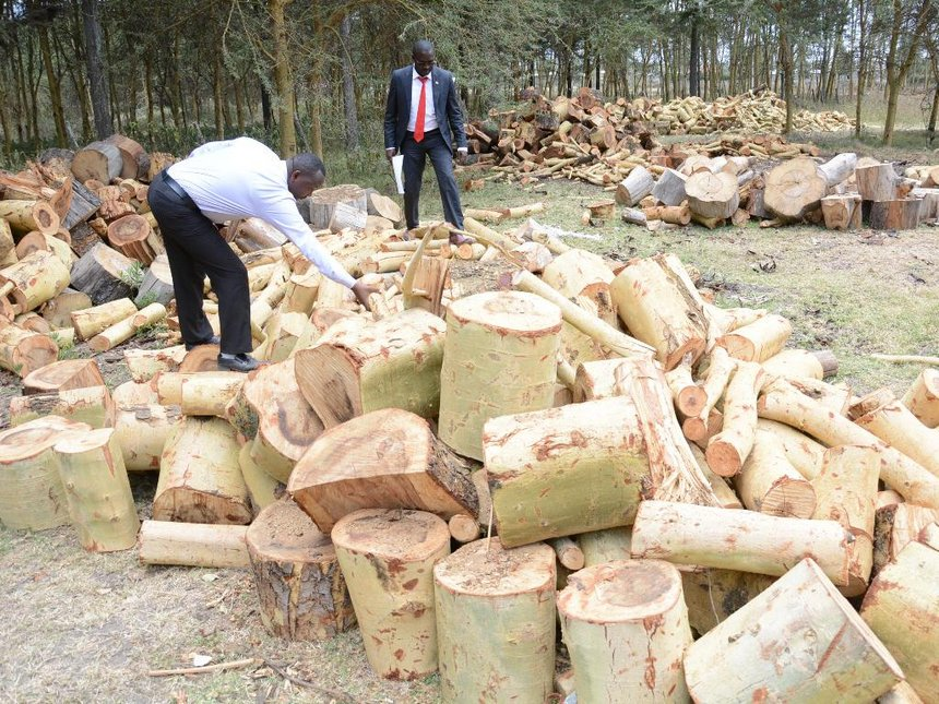 Logging ban too little too late to save shrinking forests