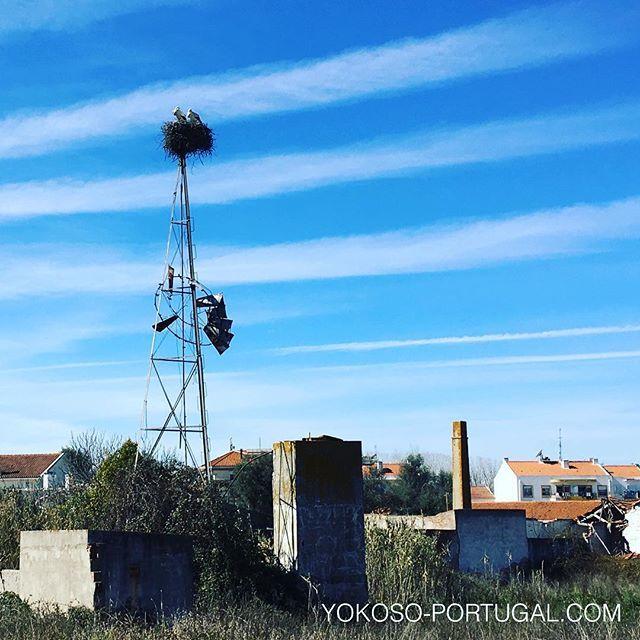 test ツイッターメディア - ポルトガルにはたくさんのコウノトリが生息しています。 #ポルトガル https://t.co/Y7AqgKslFs