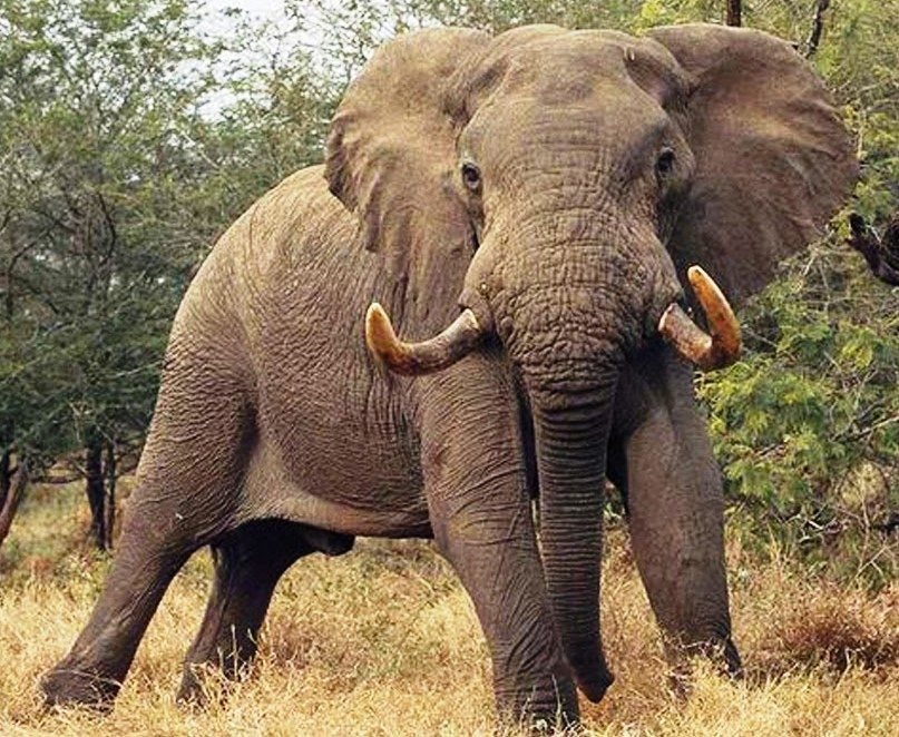 US lifts ban on trophy hunting