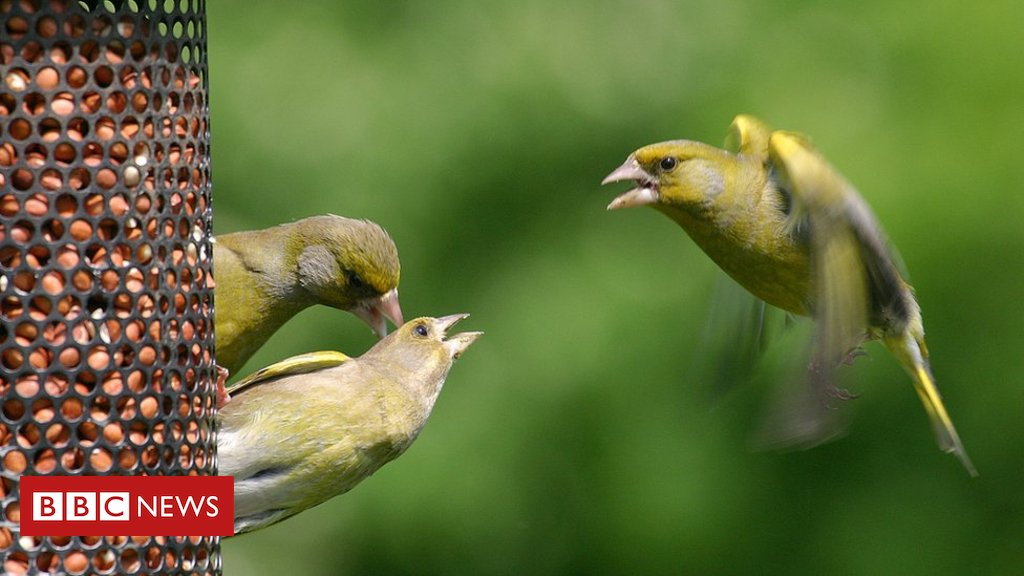 Feed the birds, but be aware of risks, say wildlife experts