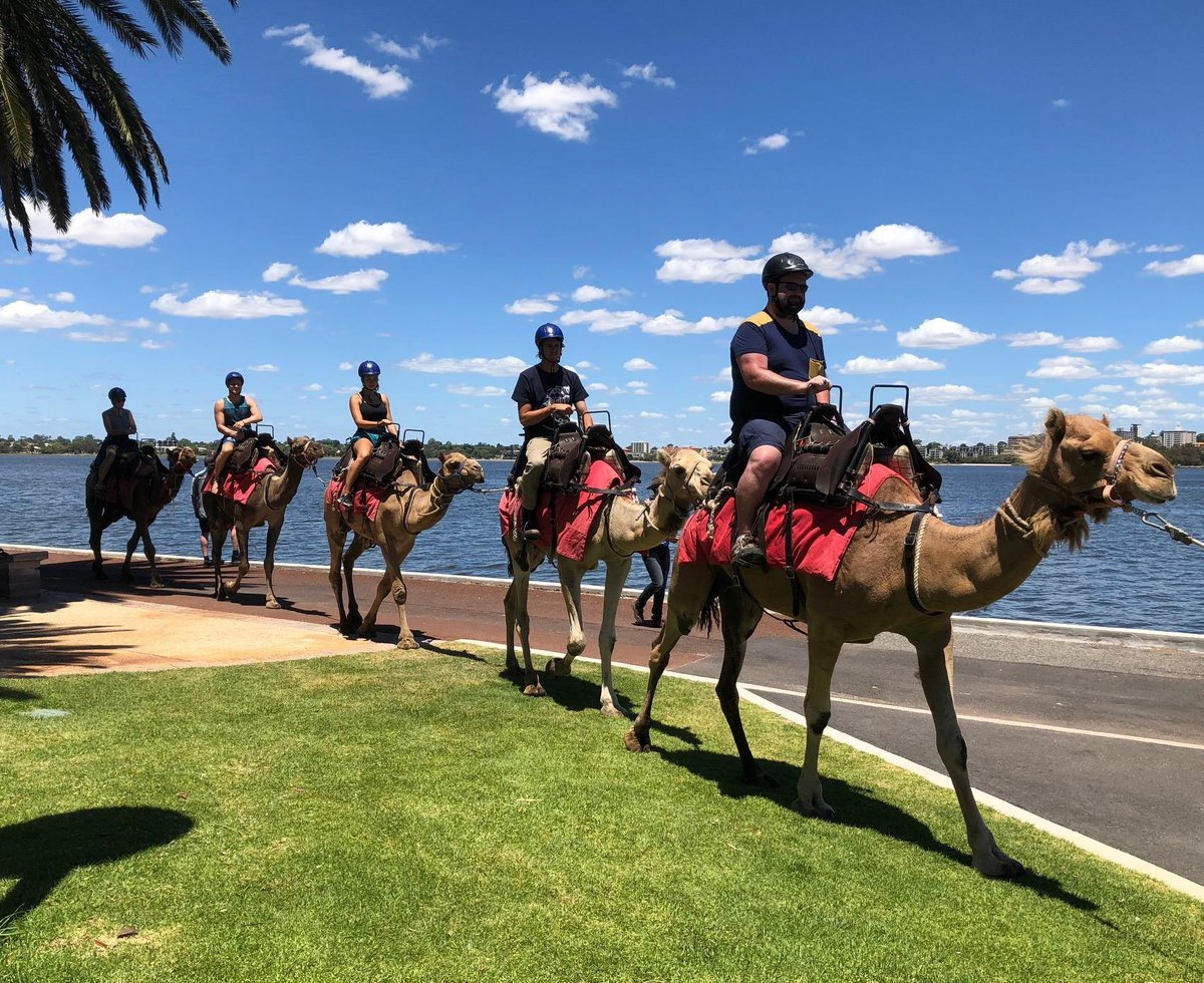 Camel tours are the new way to see Perth