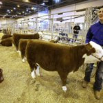 Teen goes from wheelchair to standing tall with a winning heifer at Houston rodeo