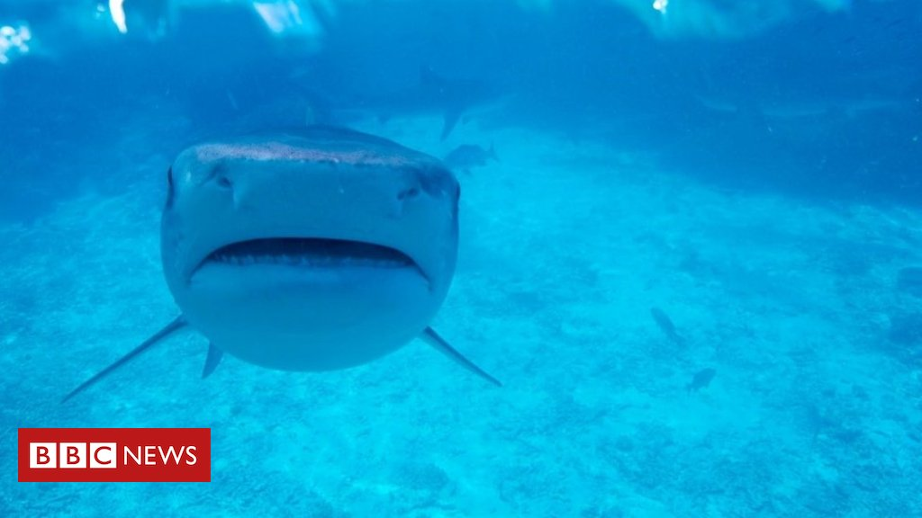Why sharks like it hot - but not too hot