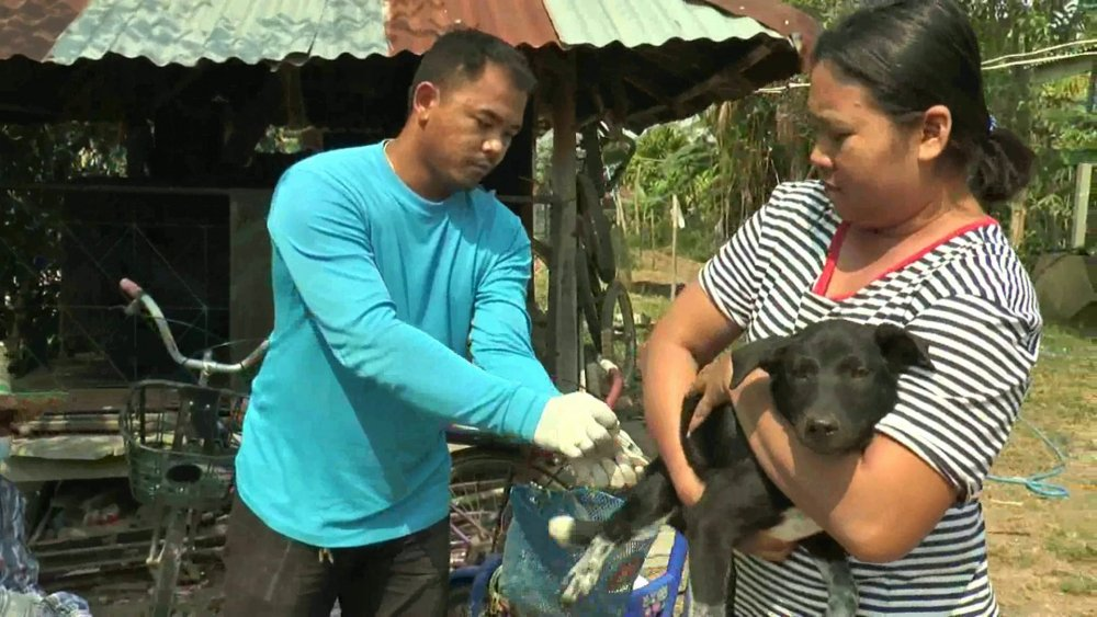 Thailand steps up rabies vaccinations as infections spread