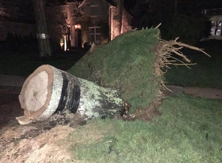 Fallen tree knocks down power lines, shuts down Myers Park road - | WBTV Charlotte