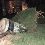 Fallen tree knocks down power lines, shuts down Myers Park road -   WBTV Charlotte