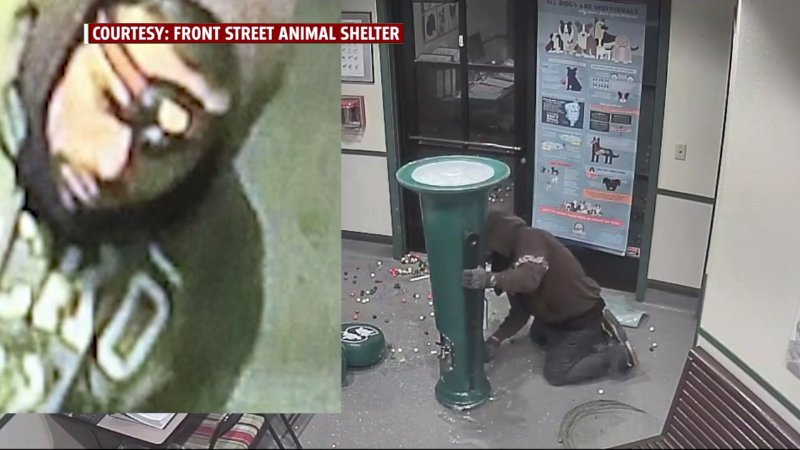 Video shows 'gumball bandit' struggling to steal animal shelter's candy machine