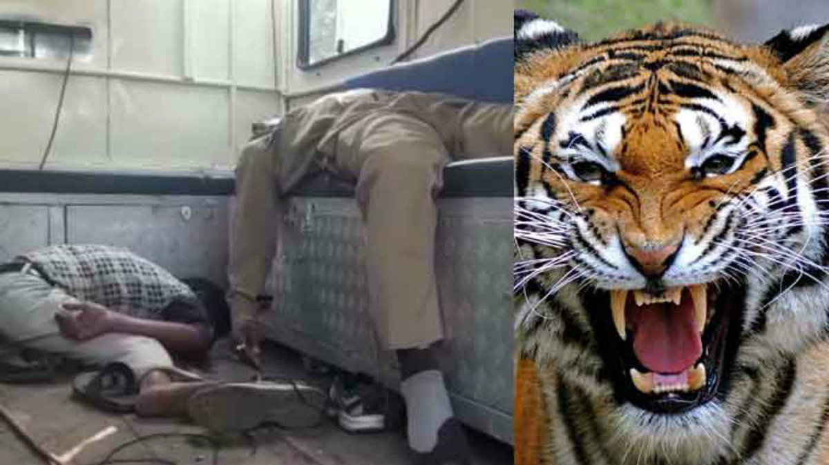 West Bengal: Mysterious death of two forest officials who went to catch tiger spreads panic