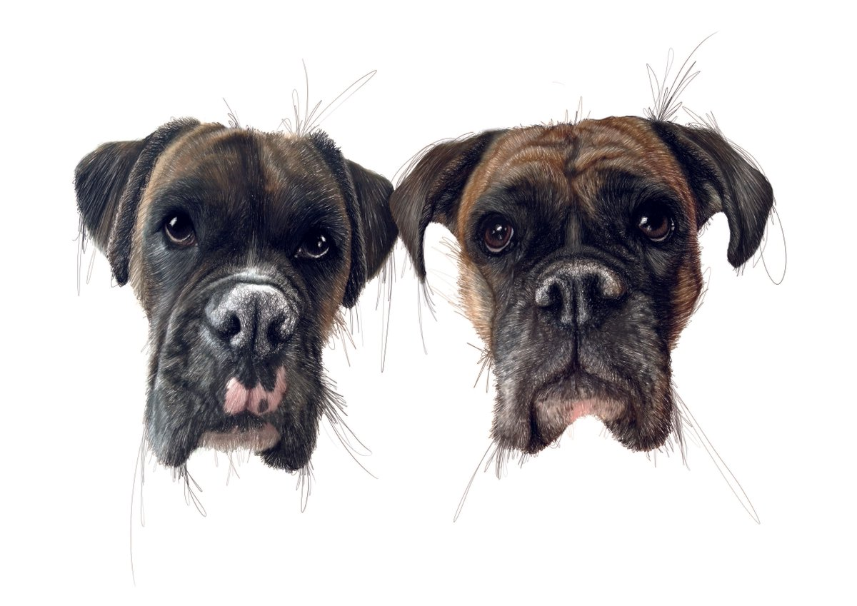 Excellent dog drawing by 'FrancescaSullivan' from the site: https://t.co/wSGiiZsMb4 https://t.co/khwtsU4D6O