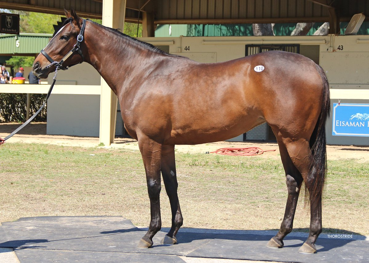 test Twitter Media - Loved this Arch filly purchased on behalf of new group Front Row Partners for $130k @OBSSales March. 1/2 to super talented French colt Mind Mapping. This beauty will be headed to Chad Brown, very excited to see her develop! https://t.co/NAE8JKy7nT