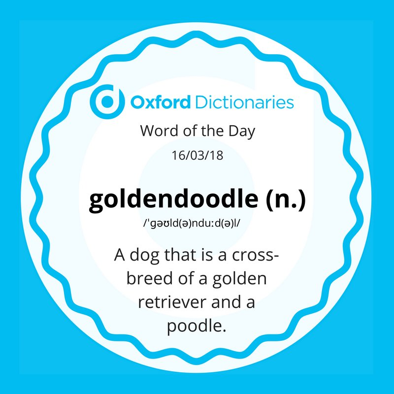 test Twitter Media - Word of the Day: goldendoodle https://t.co/X3xDScntFv https://t.co/Wvt6suPz52