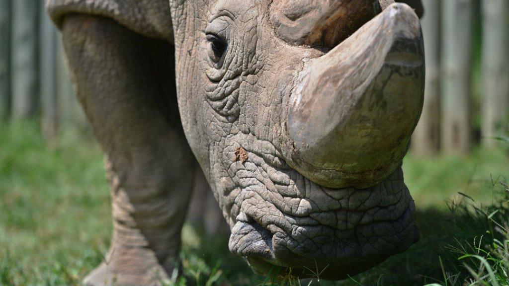Worse species decline since dinosaurs' extinction, says UN