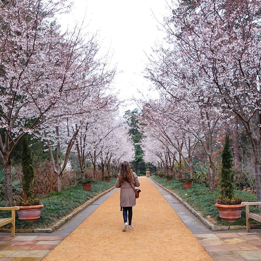 RT @DurhamNC: Spring has sprung in Durham 🌸🐂🏙️🌸  📸 by @megstraveling https://t.co/CPwmyPWVVV