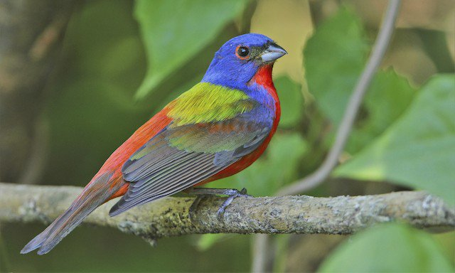 test Twitter Media - New database alert:: Birds of North America (BNA) - a comprehensive reference for the life histories of over 760 bird species that breed in the United States and Canada. https://t.co/lEDSceTalx https://t.co/vbXWkwRm0X