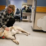 In ICUs, a furry friend to comfort patients