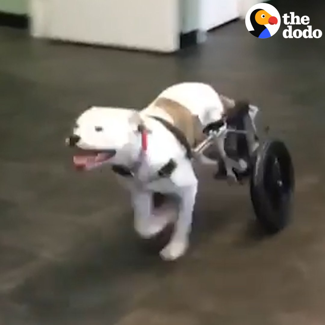The look on this dog's face when she runs on her own for the very first time ❤️ https://t.co/2vDcNOSjic