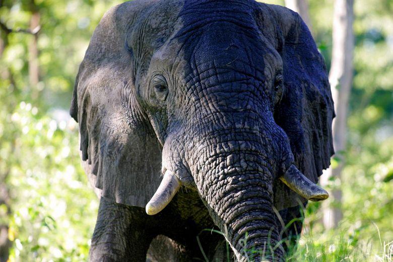 Botswana accuses US of 'encouraging' elephant poaching