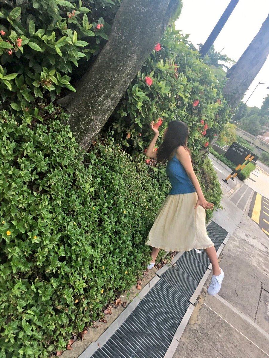 シンガポールのいたるところにある花。 何という名前なんでしょう…?  #まずは匂いをチェック #与田祐希 ...