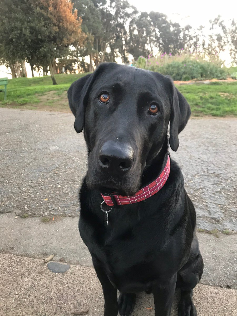 My dog Butch says hello. Dsu6l91vfx