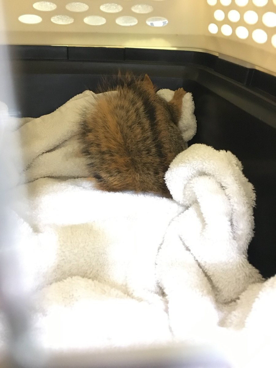 This is the squirrel I was talking about inside kitty carrier . we took her to animal hospital last