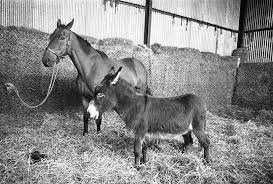 RT @AnaglogsDaughtr: BFF Arkle and Nellie, She died shortly after Arkle died. https://t.co/IUvWQkEYZI