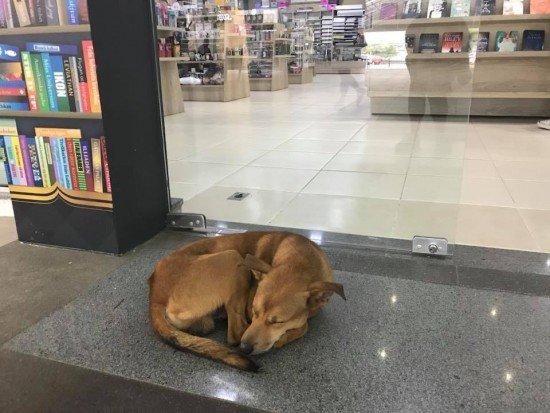 Não confie nessa carinha! Esse cão foi flagrado roubando uma livraria; veja o vídeo