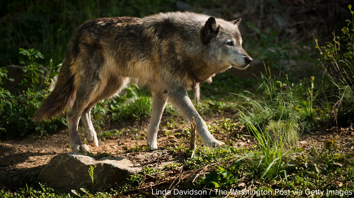 More than 100 members of Congress are asking for more funding to protect endangered species.
