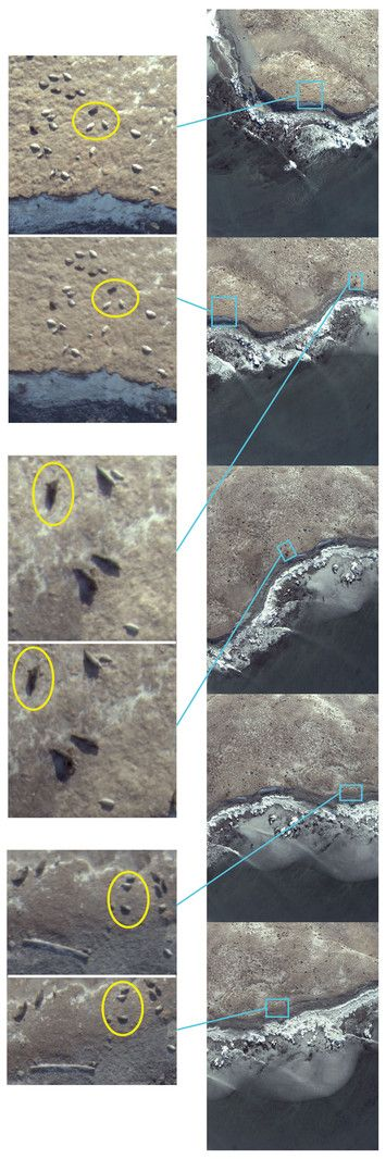 test Twitter Media - Assessing the disturbance potential of small unoccupied aircraft systems (UAS) on gray seals (Halichoerus grypus) at breeding colonies in Nova Scotia, Canada https://t.co/QGfePk10og https://t.co/ihycTO9feJ