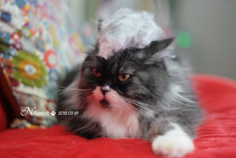 猫 ウィッグ