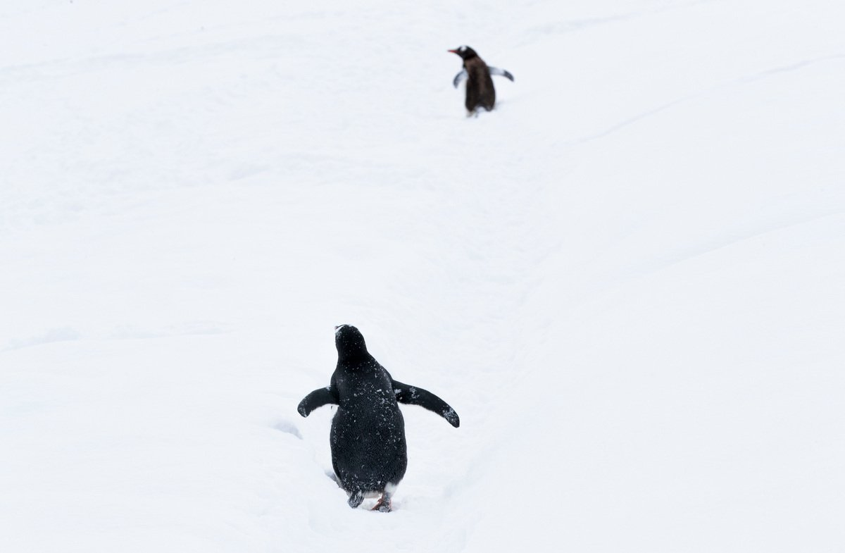 """""""Whoever gets to the weekend first WINS! https://t.co/COw8MR2Zvr #ProtectAntarctic https://t.co/QjVn4O2Hlr"""