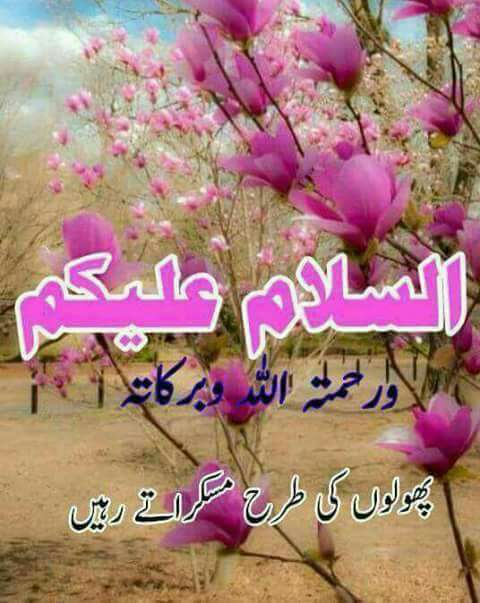 Asslam o alikum ji and vary sweet good morning to all my sweet friends helo https://t.co/1elcH2AlPG