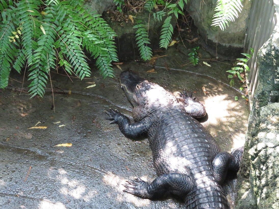 test ツイッターメディア - 東山動植物園のワニ https://t.co/D1ZUstBdr6